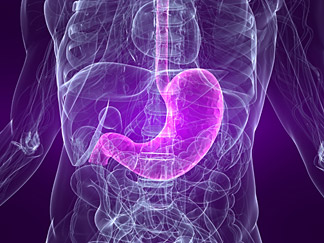 Your Digestion - Copyright – Stock Photo / Register Mark