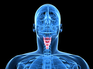 Thyroid - Copyright – Stock Photo / Register Mark