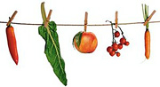 Vegetables clipped to a clothesline. - Copyright – Stock Photo / Register Mark